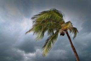 Hurricane Irma Palm Tree Winds